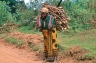 Young Kikuyu woman carrying heavy load of firewood on her back Aberdares Kenya