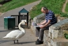 Newspaper_Reading_Swan