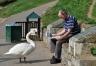 Newspaper_Reading_Swan